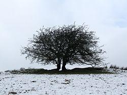 Imatge relacionada amb arbre