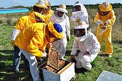Imatge relacionada amb apicultura
