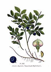 Imatge relacionada amb nabiu