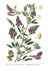 Imatge relacionada amb alfals