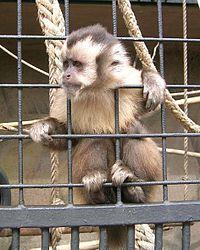 Imatge relacionada amb gàbia