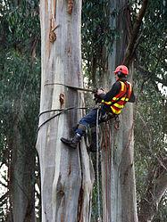 Imatge relacionada amb arboricultor
