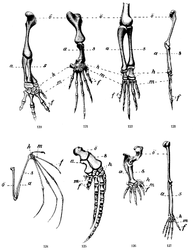 Imatge relacionada amb extremitat