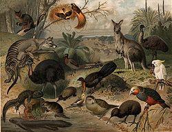 Imatge relacionada amb fauna