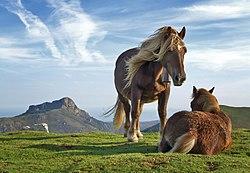 Imatge relacionada amb cavall