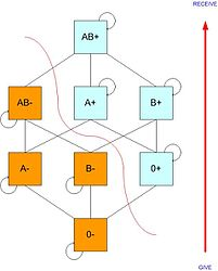 Imatge relacionada amb grup sanguini
