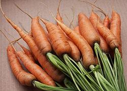 Imatge relacionada amb pastanaga