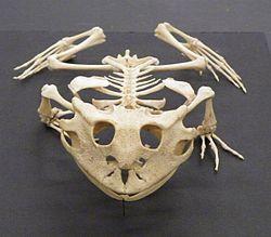 Imatge relacionada amb anatomia