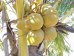 Imatge relacionada amb coco