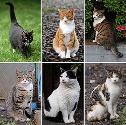Imatge relacionada amb gat