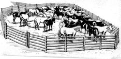 Imatge relacionada amb corral