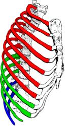 Imatge relacionada amb costella
