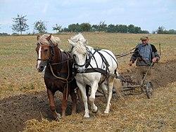 Imatge relacionada amb agricultura