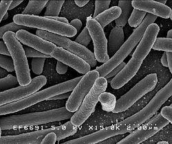 Imatge relacionada amb organisme