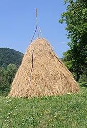 Imatge relacionada amb paller