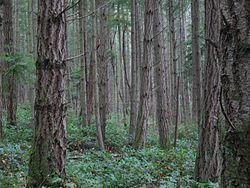 Imatge relacionada amb bosc