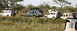 Imatge relacionada amb safari