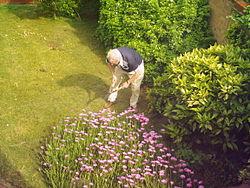 Imatge relacionada amb jardiner