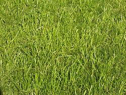 Imatge relacionada amb herba