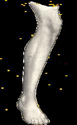 Imatge relacionada amb cama