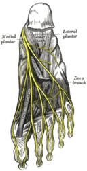 Imatge relacionada amb peu