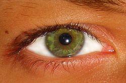 Imatge relacionada amb verd