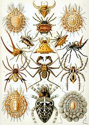 Imatge relacionada amb aràcnid