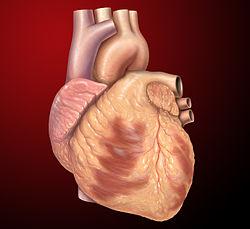 Imatge relacionada amb cor