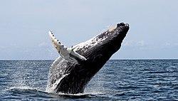 Imatge relacionada amb balena