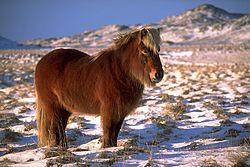 Imatge relacionada amb poni