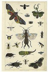 Imatge relacionada amb entomologia