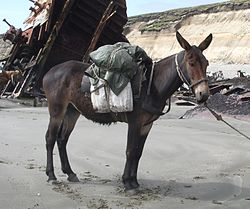Imatge relacionada amb mul