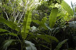 Imatge relacionada amb jungla