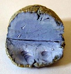 Imatge relacionada amb potassi