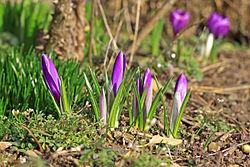 Imatge relacionada amb primavera