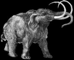 Imatge relacionada amb mamut