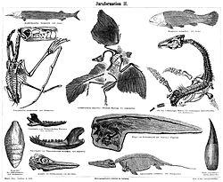 Imatge relacionada amb vertebrat