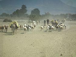 Imatge relacionada amb bestiar