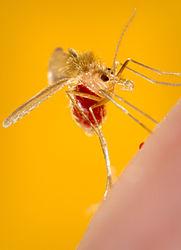 Imatge relacionada amb zoonosi