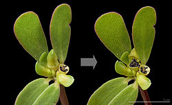 Imatge relacionada amb càpsula