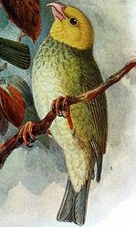 Imatge relacionada amb ou