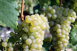Imatge relacionada amb viticultura