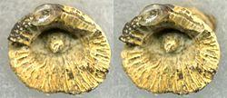 Imatge relacionada amb corall