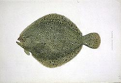 Imatge relacionada amb rèmol