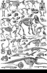 Imatge relacionada amb esquelet