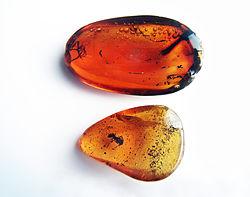 Imatge relacionada amb ambre