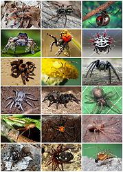 Imatge relacionada amb aranya