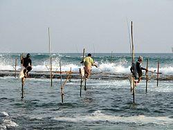 Imatge relacionada amb pesca