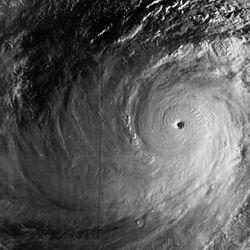 Imatge relacionada amb tifó