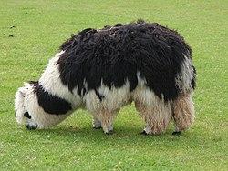 Imatge relacionada amb alpaca